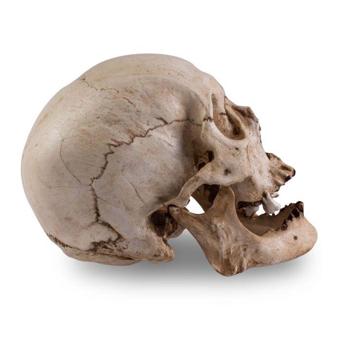 Skull Shoppe – Älterer Asiat